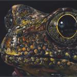 kendall king, scratchboard, animal, orange frog