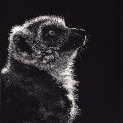 lemur, scratchboard, kendall king