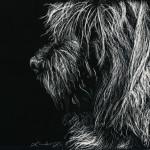 scratchboard, pets, kendall king, cairn terrier