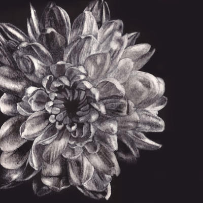 flowers, scratchboards, portrait, Kendall King