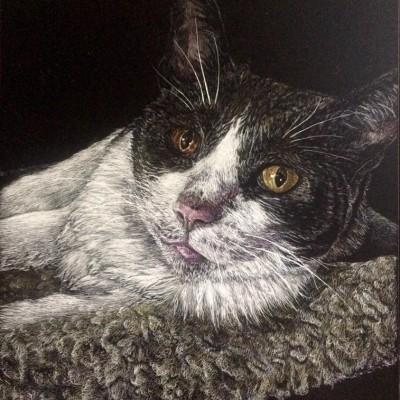 cat, animal scratchboard, pet portrait, kendall king