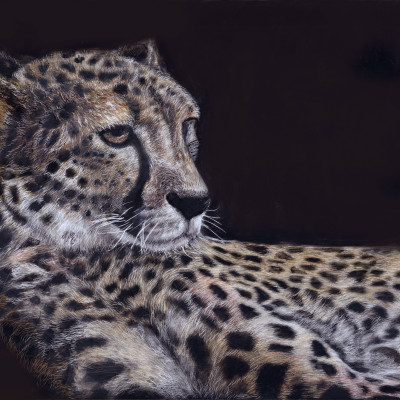 kendall king, scratchboard, animal, cheetah