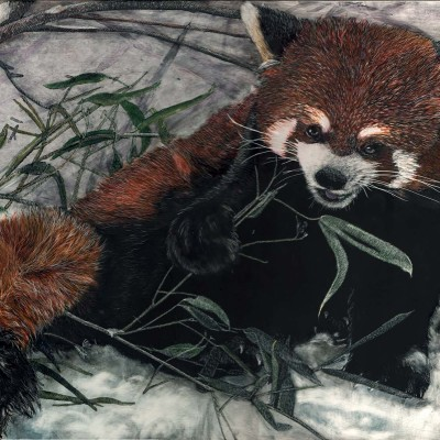 red panda, scratchboard, kendall king, animal