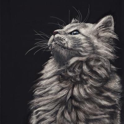 animal scratchboard, pet portrait, kendall king, cat