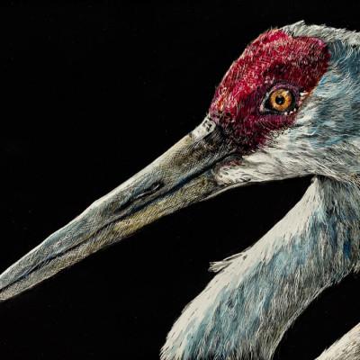 kendall king, scratchboard, sandhill crane, bird