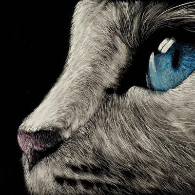 scratchboard, pets, kendall king, cat, portrait