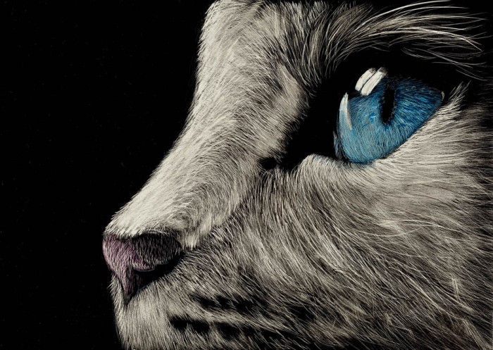 scratchboard, pets, kendall king, cat, portrait