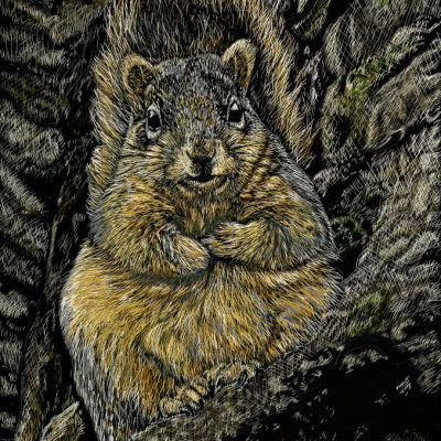 kendall king, michigan, squirrel, fat squirrel, scratchboard