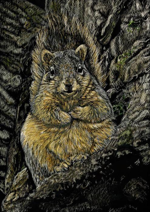 kendall king, michigan, squirrel, fat squirrel, scratchboard