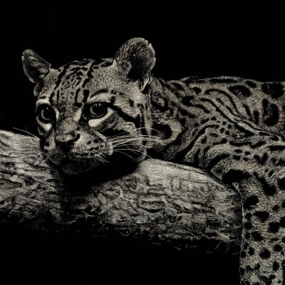 kendall king, scratchboard, animal, ocelot