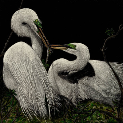 kendall king, birds, scratchboard, great heron,