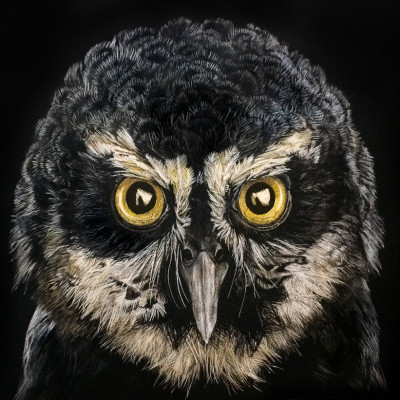 kendall king, scratchboard, animal, snowy owl, bird, Spectacled Owl